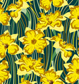 narcissus seamless pattern vector image vector image