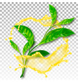realistic tea leaves splash with drops vector image