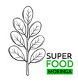 icon superfood moringa vector image vector image