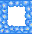 blue morning glory flower border vector image