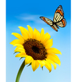Nature background with sunflower and butterfly vector image vector image