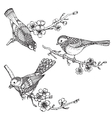 Set of hand drawn ornate birds on sakura flower vector image vector image