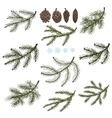Spruce branches with Pine cones set vector image vector image