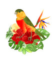 tropical bird cute small funny bird vector image vector image