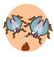 fly on a poo vector image