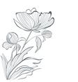 Stylized Peony flowers vector image