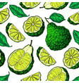 bergamot seamless pattern drawing vector image vector image