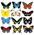 Colorful Butterflies Collection vector image vector image