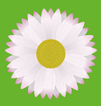 Daisy vector image vector image