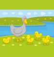 ducks family vector image