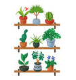 house flowers shelf indoor floriculture vector image vector image