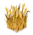 Planting and cultivation of wheat isolated vector image vector image