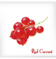 red currant realistic vector image