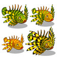 the set of stages of a growing red lionfish or vector image vector image