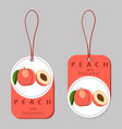 whole ripe red fruit peach green stem leaf vector image