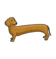 very long dachshund dog sketch vector image vector image