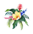 watercolor bouquet tropical leaves and vector image vector image