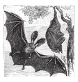 Brown bat vintage engraved vector image vector image