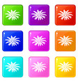 camomile flower icons set 9 color collection vector image vector image