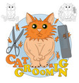 cat grooming vector image vector image