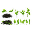close up realistic tea dried herbs and greens tea vector image