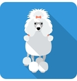 dog Poodle icon flat design vector image