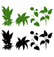 set of silhouette plant vector image