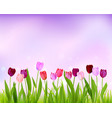 sky tulip spring banner vector image vector image