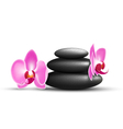 stack spa stones with orchid flowers isolated vector image vector image
