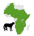 cheetah distribution Africa vector image