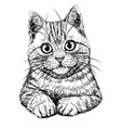 cat graphic hand-drawn black and white sketch vector image vector image