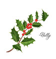 christmas holly mistletoe ilex leaves vector image vector image