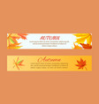 autumn banners set with maple foliage vector image