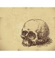 Hand drawn skull vector image vector image