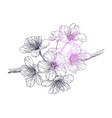 the spring blossoming flowers vector image vector image