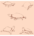 Turtles Pencil sketch by hand Vintage colors vector image vector image