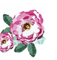 Watercolor Pink Rose flowers isolated