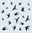 bird swallows flying in the sky vector image vector image