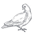 dove or pigeon isolated animal sketch bird peace vector image vector image