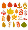 golden and red autumn leaves brunches and berries vector image
