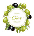 Olive round banner vector image