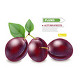 plums realistic isolated fruits harvest vector image vector image