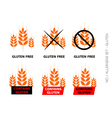 Orange Gluten Free Signs isolated on white vector image