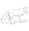 fox drawing on white background vector image vector image