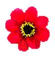 red pixel flower art vector image