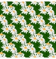 Seamless pattern with bouquets of daisies vector image vector image