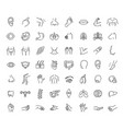 set line icons anatomy vector image vector image