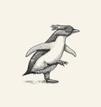 erect-crested penguin or macaroni cute small vector image vector image