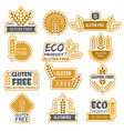 gluten free badges eco bio farm fresh natural vector image vector image