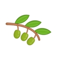 Olive branch with green olives icon cartoon style vector image vector image